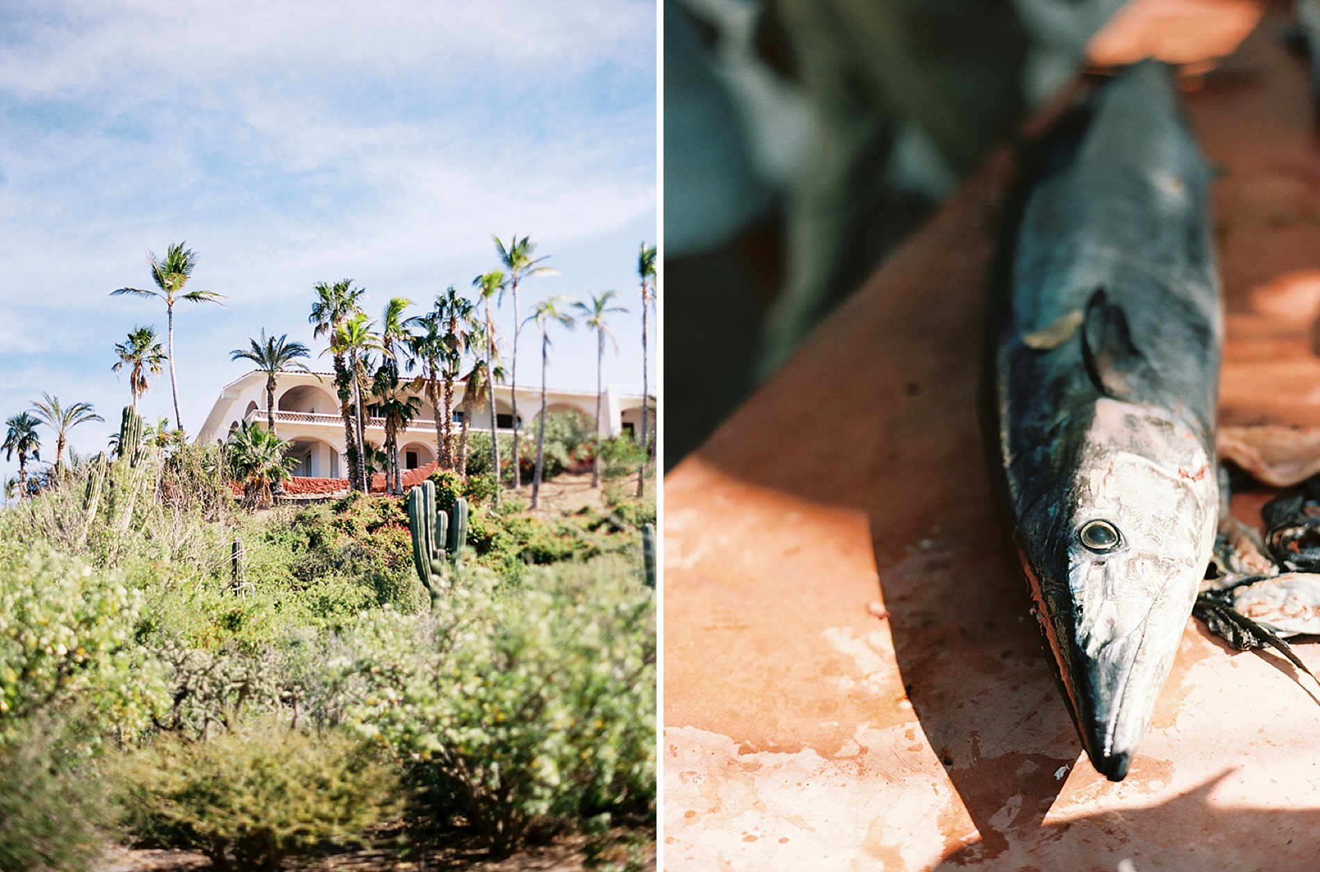 Luxury Destination Wedding in Baja California